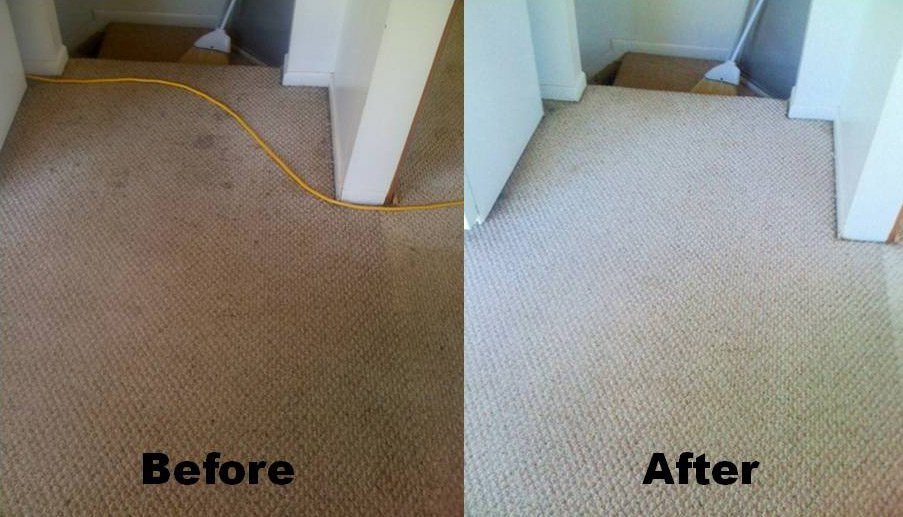 Carpet Clean Before & After